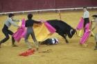 """pede a Portugal para afastar as crianças da """"violência da tauromaquia"""""""