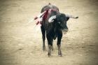 Parlamento Europeu aprova o fim dos subsídios para as touradas?